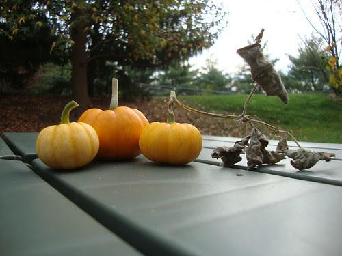 my 2013 pumpkin trio