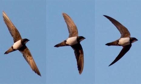 Unduh 55 Foto Gambar Burung Mau Terbang HD Terbaru Gratis