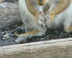 Ever notice that squirrels don't have thumbs