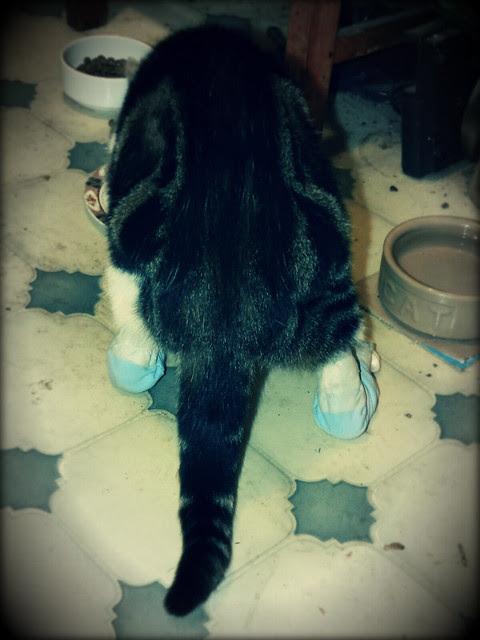 Thatsit with her new sock tubes