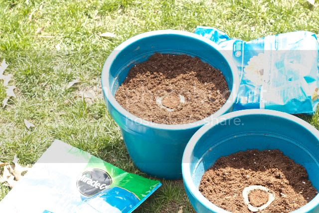 Planted Gro-Ables