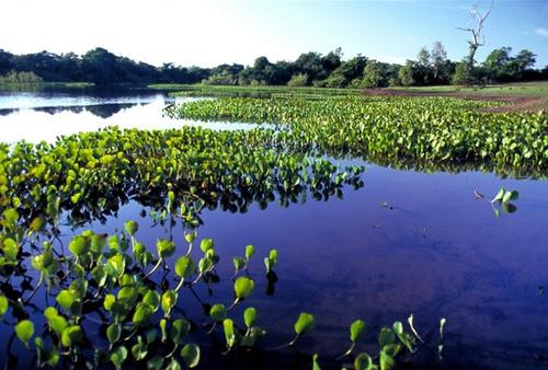 Bonito Mato Grosso do Sul - Natureza
