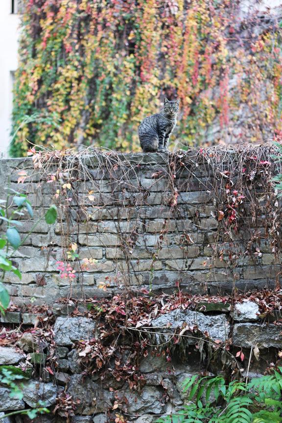 fall wall