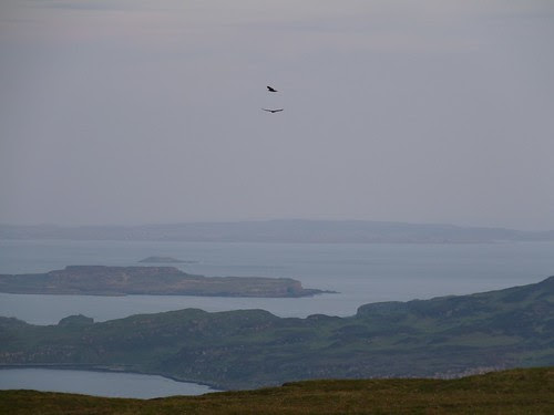 21750 - Golden Eagle on Mull