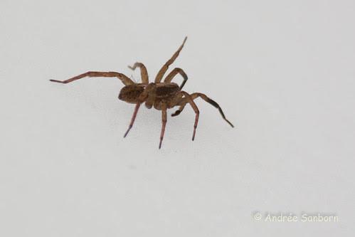 Spider in field of snow (4 of 4).jpg