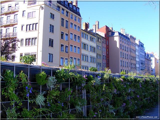 mur+végétal+quai+fulchiron