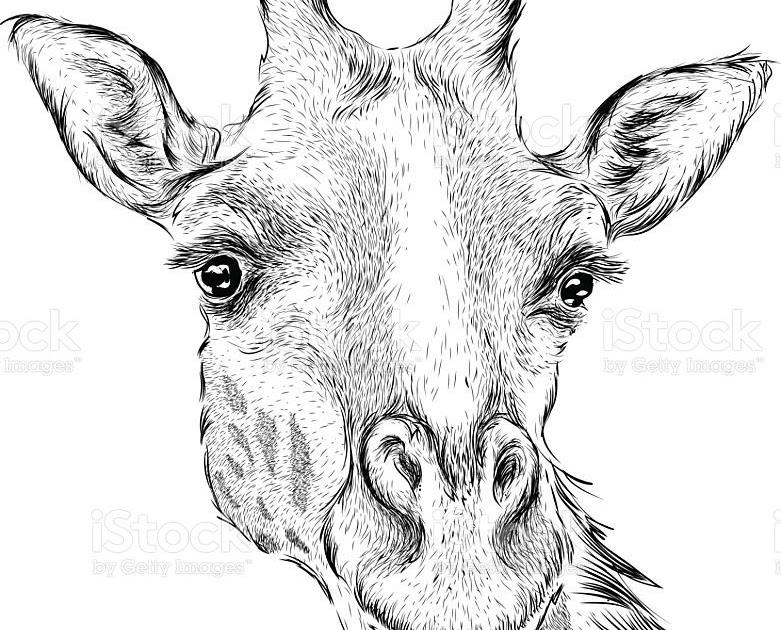 giraffe zeichnen einfach  malvorlagen gratis