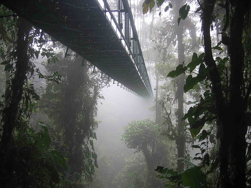Archivo:Costa rica santa elena skywalk.jpg