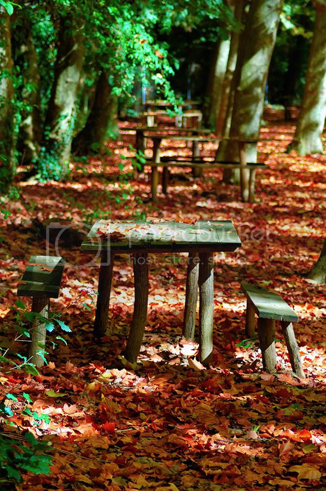 Autumn leaves around wooden table and benches [enlarge]