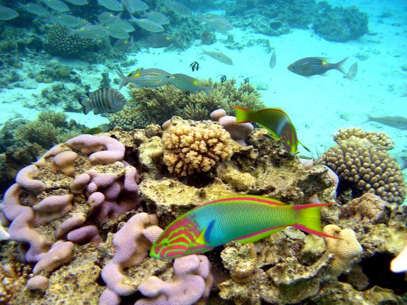 Price Sanctuary Rarotonga on the Beach (Adults Only)