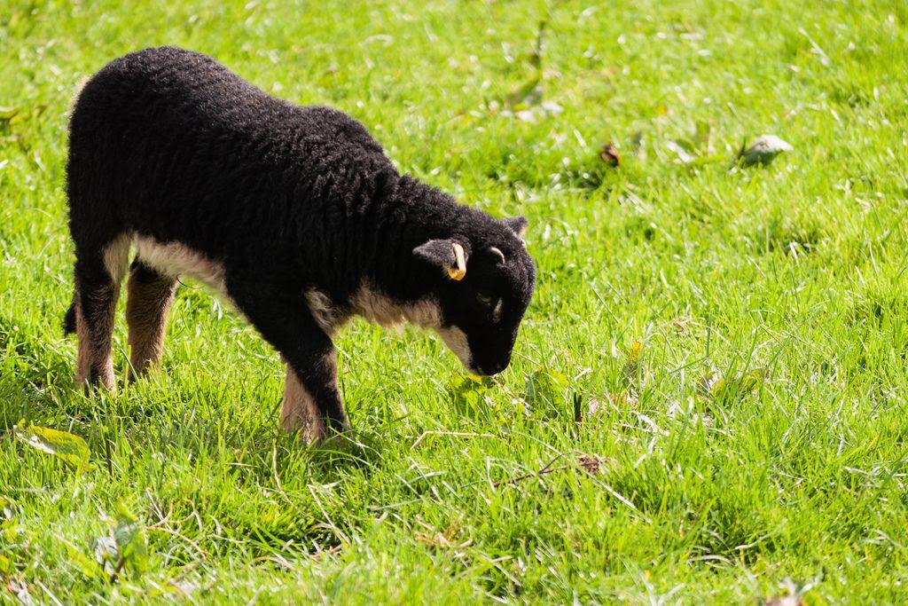 whenever, Lambing season is upon us already...