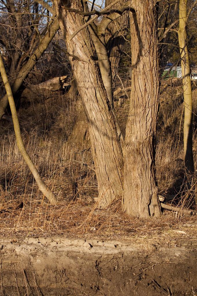 sunkissed trees