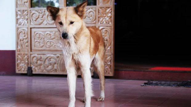¿Mi perro puede padecer de anorexia?