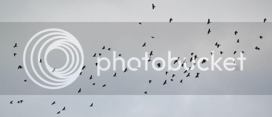 photo linnut.jpg