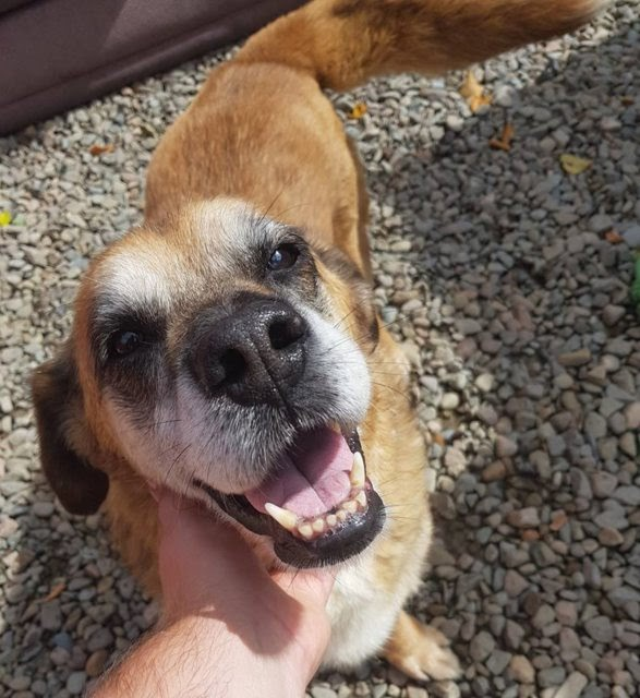 Stanford – 10 year old male Cross-Breed