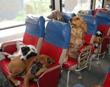 Επιτρέπεται στα τρένα η μεταφορά των ζώων συντροφιάς!