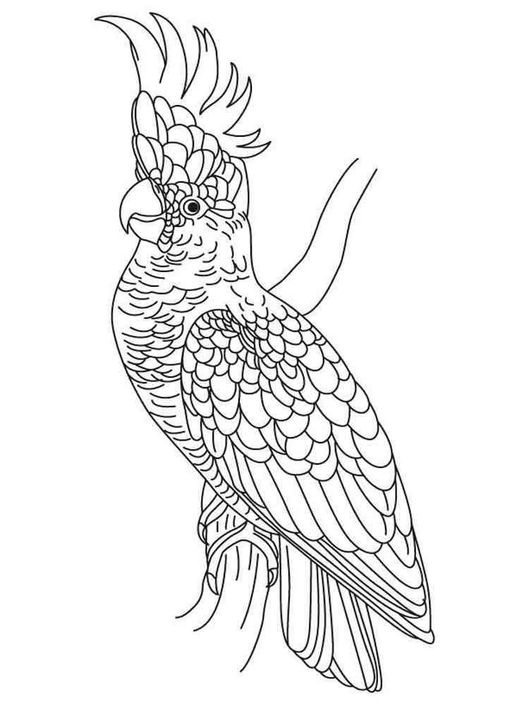Cockatoos birds coloring pages 5