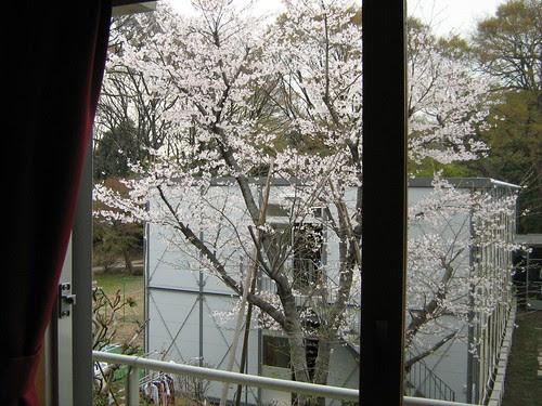 View outside my window 2