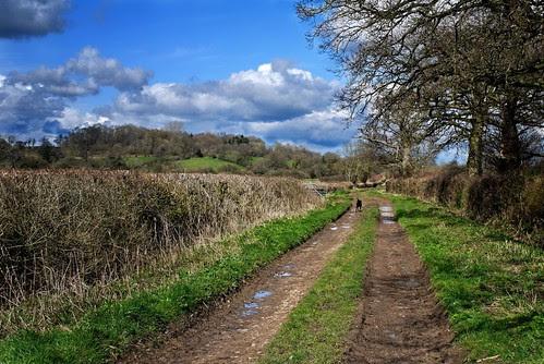 A quiet bridleway
