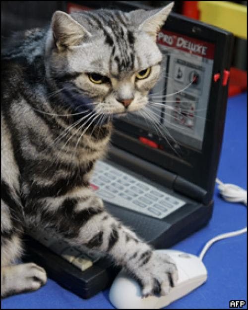 Image result for gato con laptop