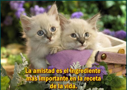 Frases De Gatitos Enamorados Imagui