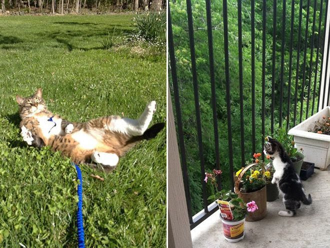Cats who rarely leave the house