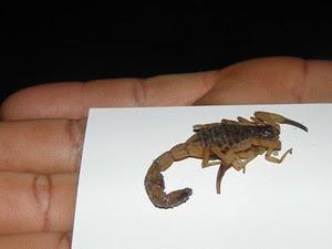 Morador mostra escorpião que picou e matou garota (Foto: Jackson Domiciano / A Gazeta Bahia)