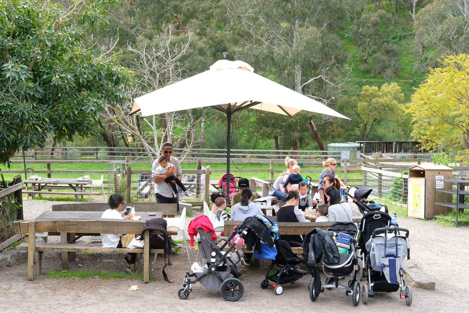 photo The Farm Cafe Collingwood 3.jpg