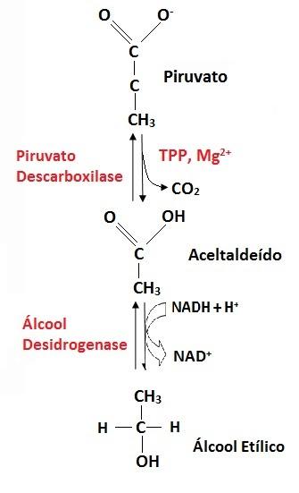 No caigas por esta Metabolismo basal estafa