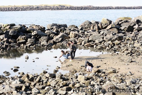 6 Searching for Tide Pools 12