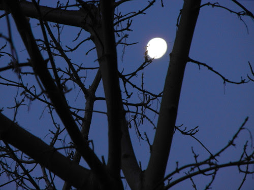 Early Morning Moon _ 9089