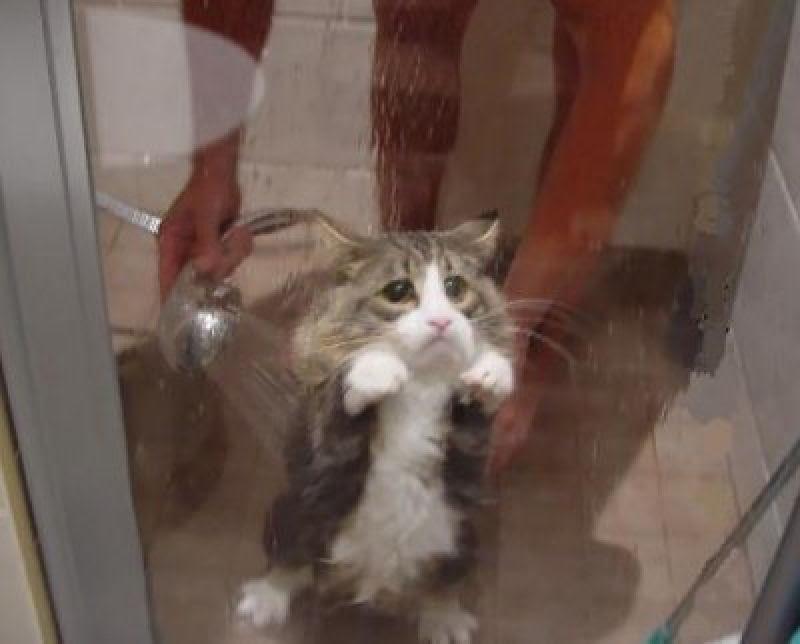 Fotografias engraçadas de gatos tomando banho 11