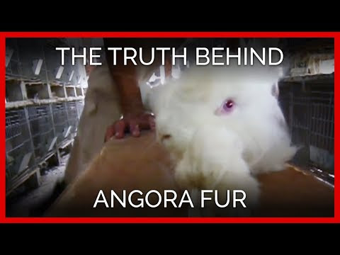 Angora fur: Fashion to kill for!