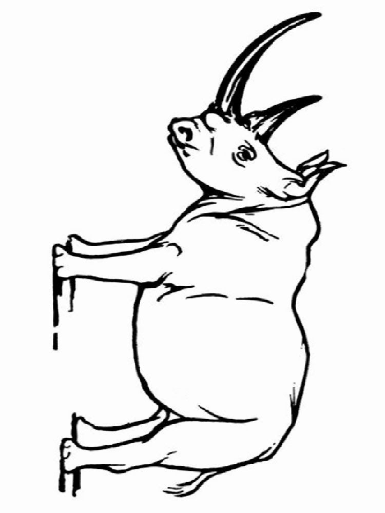 Rhino animal coloring pages 346