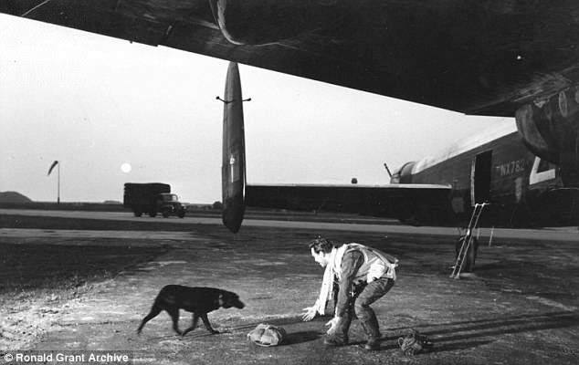 Celebrated feats: Actor Richard Todd as Wing Commander Guy Gibson with the canine who played Nigger in the famous 1955 film The Dam Busters
