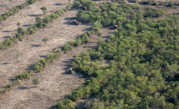FIRMAS DE EEUU SON «CÓMPLICES» DE DEFORESTACIÓN Y ABUSOS EN LA AMAZONÍA
