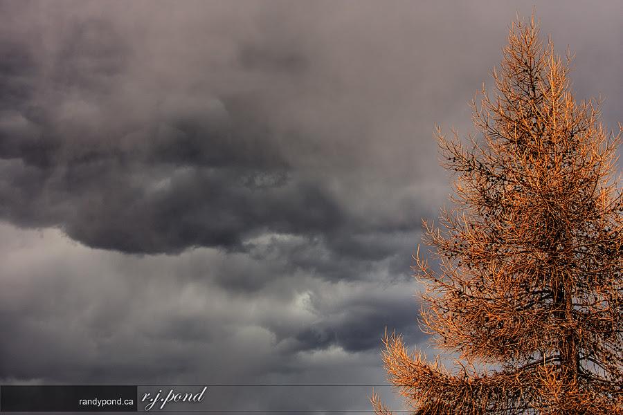 ~ 88/365 Lonely Tree ~