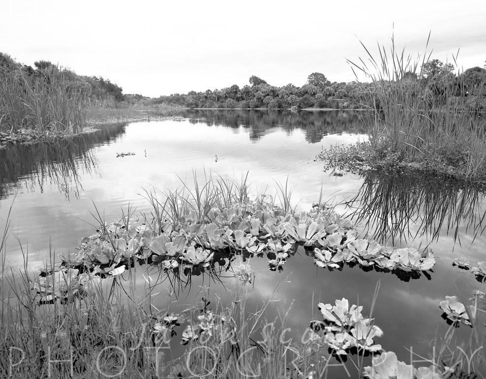 Jason Scott Photography: July 2012