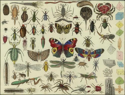 Tableau d'histoire naturelle Annelides, Crustaces, Arachnides, etc, 1834 (detail)