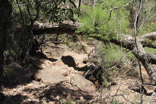 IMG 5111 At Dripping Rock