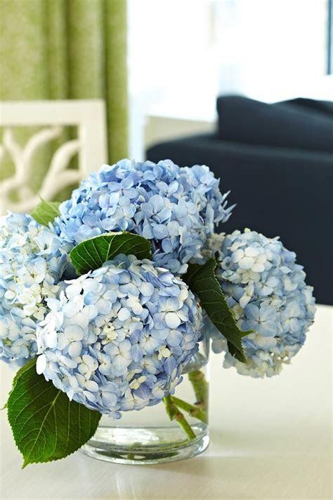 Best 25  Blue hydrangea ideas on Pinterest   Blue flowers