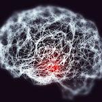 Alzheimer : des antibiotiques réduisent les symptômes chez la souris - Futura-Sciences