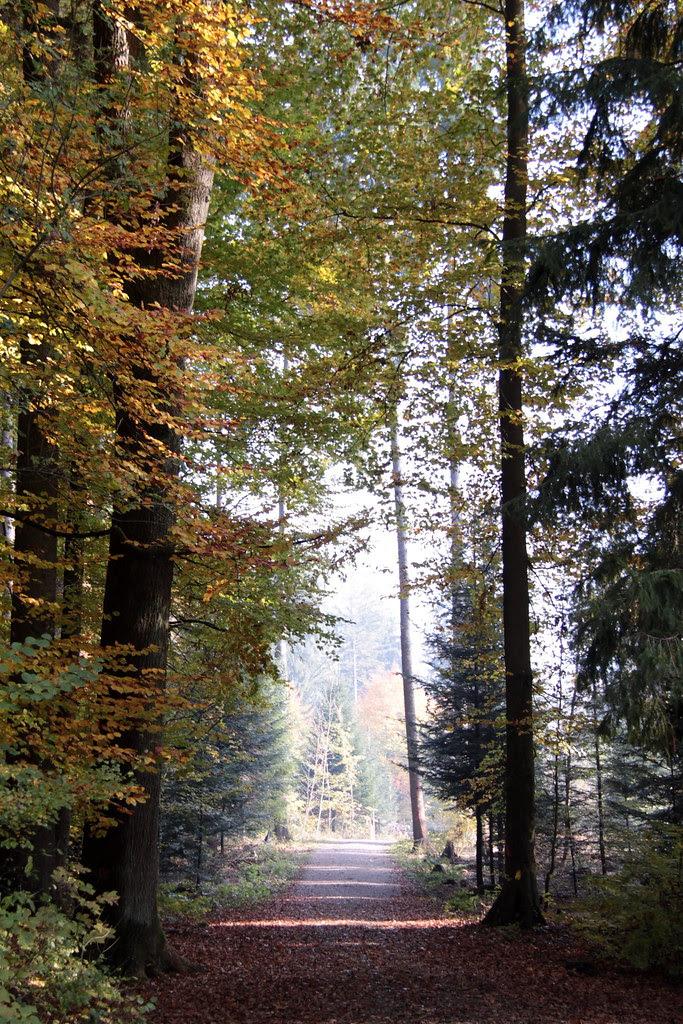 Bosque del picnic