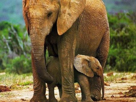 ¡Gran paso! No más maltrato a elefantes en Los Ángeles