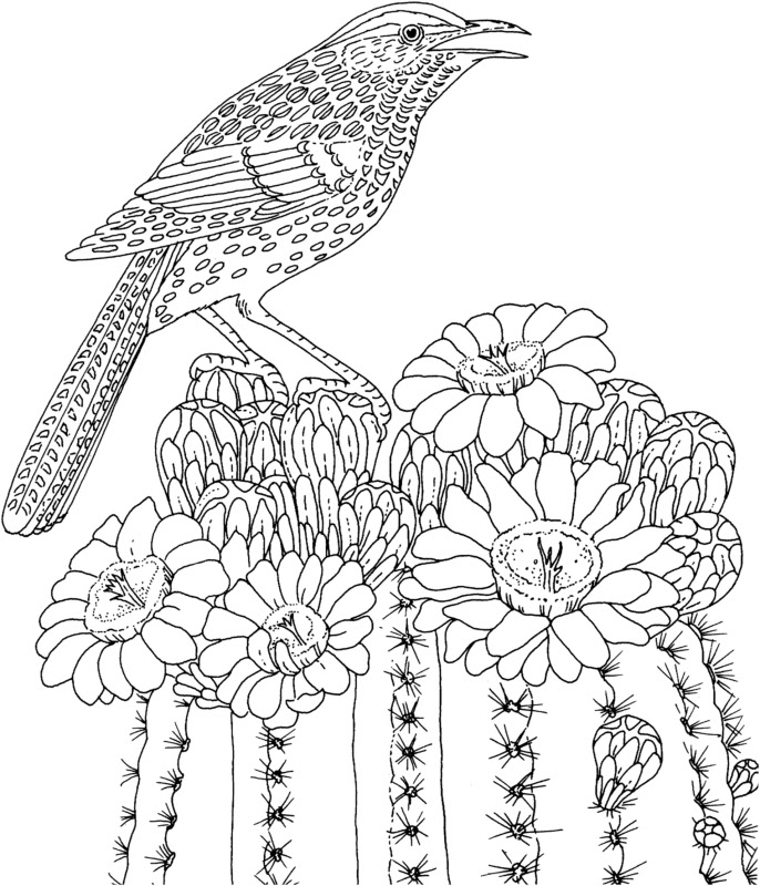 Printable Coloring Pages Of Birds