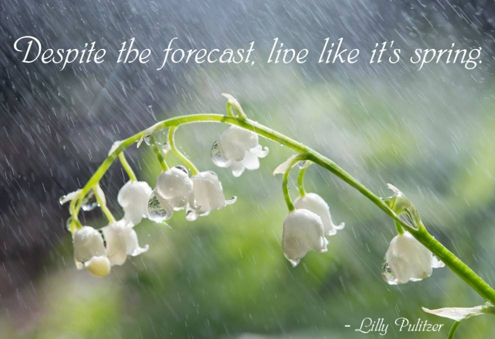 Quotes About Spring Rain 35 Quotes