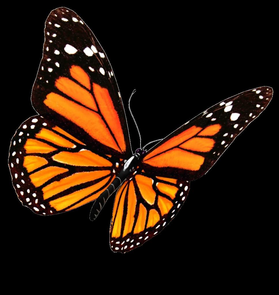 butterfly vsco aesthetic freetoedit...
