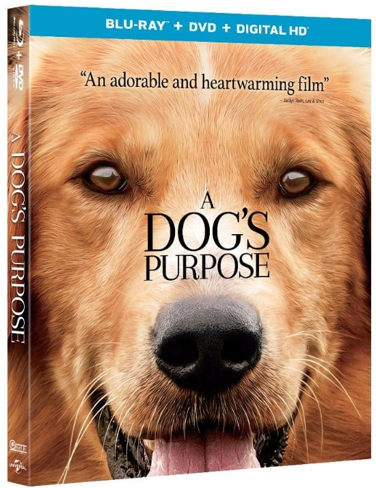 A Dog's Purpose Blu-ray Giveway