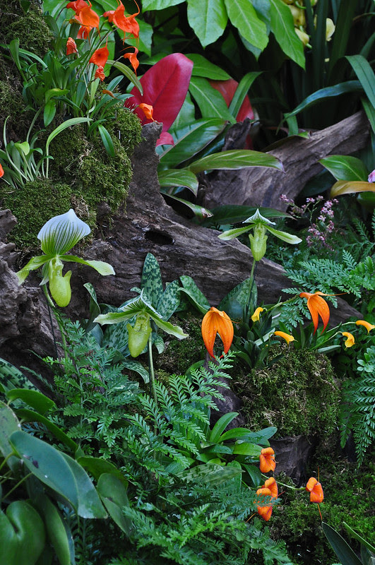 East Conservatory (Woodland Orchid Display) (1)