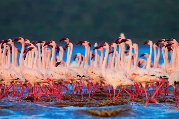 Nakuru: Η λίμνη με τα εκατομμύρια Flamingos (16)